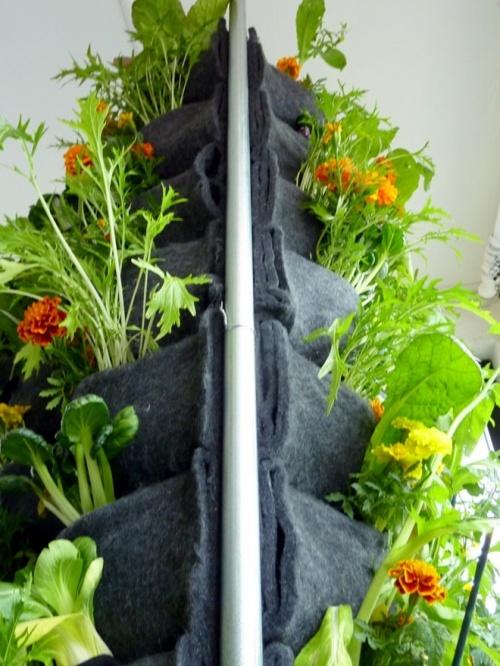 Túi vải trồng rau trong nhà Chợ bán sản phẩm xe điện đẹp tốt cao cấp uy tín giá rẻ